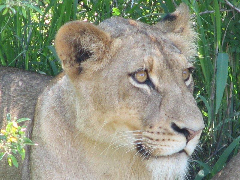 afrique-sud-2007-044